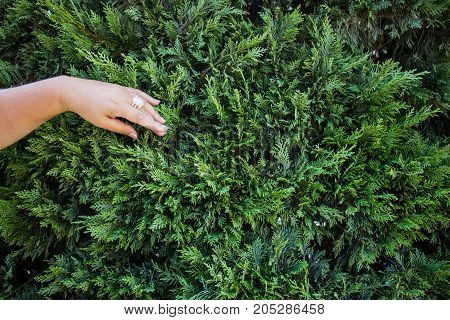 Female hand touches green petals feeling life