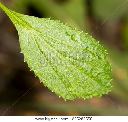 green leaf of a plant. close-up . In a park in the nature