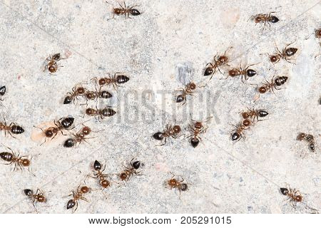 ants on the wall. close-up . In a park in the nature