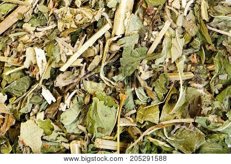 Dried catnip or cat mint can be used as a herbal tea or playful response in felines.