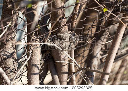 Steel wire mesh fence with trees. . In a park in the nature