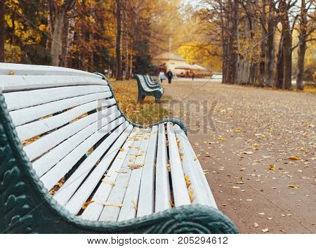 A wooden bench in autumn colorful park.