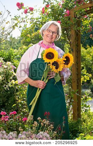 Senior Woman Standing With Sunflowers In Garden