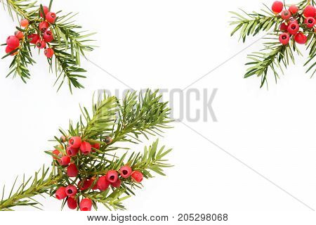 Yew twigs with fruits and place for text