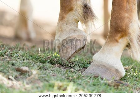 the horse's hooves on the nature . In a park in the nature
