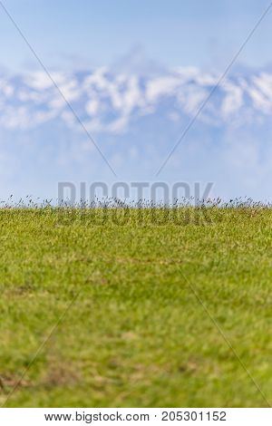green glade near the snowy mountains . In a park in the nature