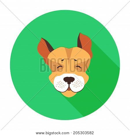 Happy muzzle of Jack Russell Terrier flat icon on green circle background with shadow. Vector illustration of movable hunting breed of dogs, small sizes. Cartoon style canine head graphic design