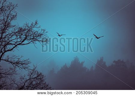 Two geese flying over a foggy area with a treeline sillhoutte and and tree branches