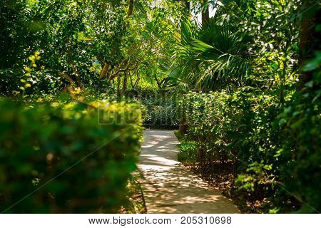 Trail in the tropical jungle in the afternoon. Tropic in park. Stone road in the forest. Palm
