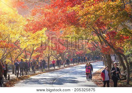Jeollabuk-do, Korea - November 10, 2014: Autumn Landscape Of Korea ,naejangsan National Park In Autu