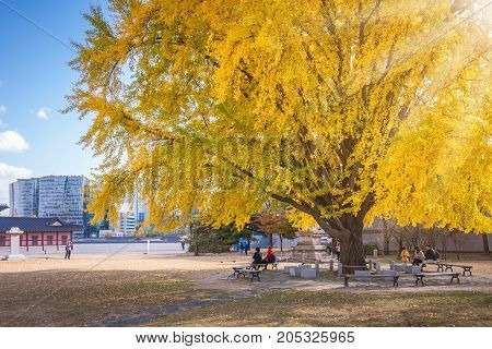 Autumn leaves uner tree in autumn for autumn background