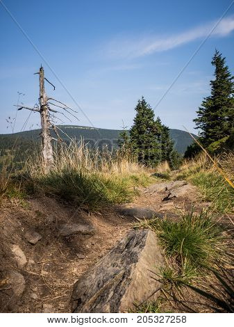 Beautiful trail in Jeseniky mountains on a sunny day.