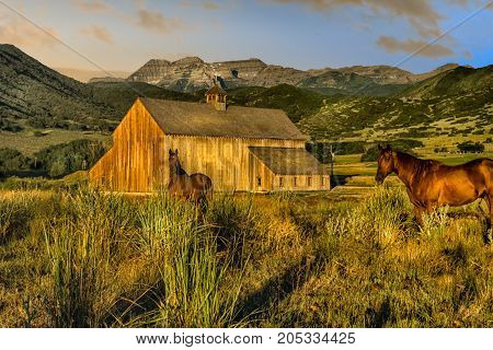 Horses at country barn with mountains in the background at dawn with warm tones