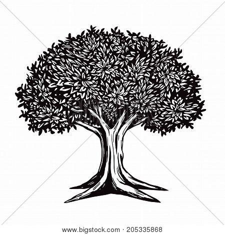 Tree Vector Drawing Illustration Logo Template Retro