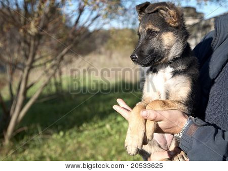 Puppy  Mongrel On Hands At The Man