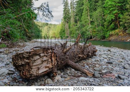 Dead Tree trunk in the  Colitz River near the La Wis Wis Campground in the state of Washinton