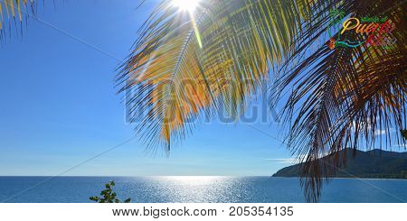 palm trees ocean view with sunlight on horizon