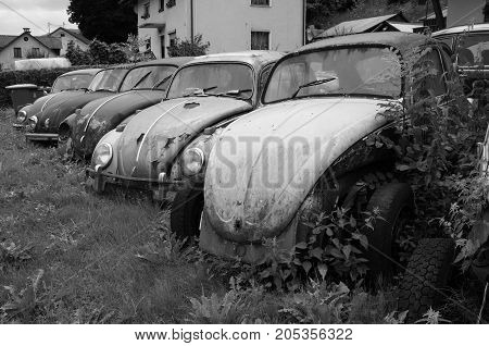 Radovljica, Slovenia - August 7, 2017:  Old rusting abandoned Volkswagen Beetles. Nobody in de vehicles.