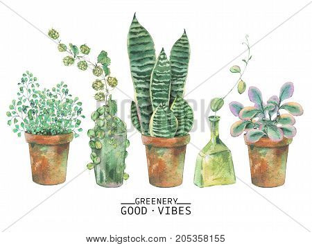 Watercolor green plants in pots. Natural watercolor greeting cards isolated on white background, greenery botanical illustration