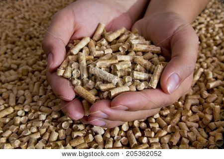 Biofuels. Alternative biofuel from sawdust wood pellets in hand. The cat litter.