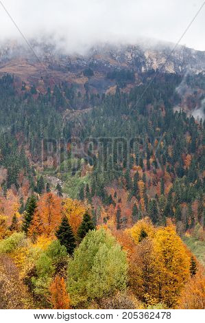 rock climbing, nature, travelling concept. top view of magnificent autumn forest of all kinds of trees and different coloures, high mountain is standing under it, and clouds are hiding the top