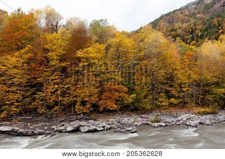 travelling, hiking, wild life concept. wonderful season of rains and clouds covered trees that grows nearby river by golden yellow and calm orange coloures