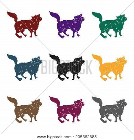 Norwegian Forest Cat icon in black design isolated on white background. Cat breeds symbol stock vector illustration.