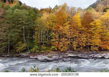 beauty of nature, trekking, countryside concept. there is strong contrast between trees, colours are changing from dark green ro light, from fresh golden yellow to old brown