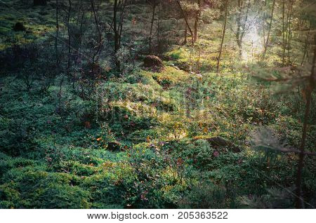 Landscape of mossy ground in beautiful forest with sun shining.