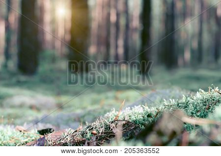 Close-up of grass and pine needles on ground with blurry background of trees in woods.