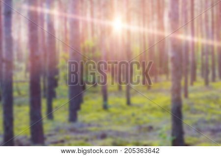 Blurred shot of bright sunlight shining among trees in woods.
