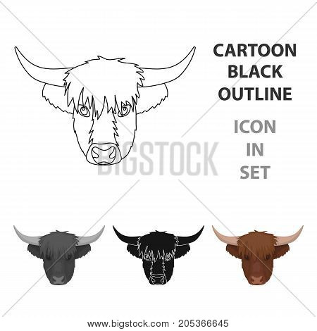 Highland Cattle Head Vector & Photo (Free Trial) | Bigstock