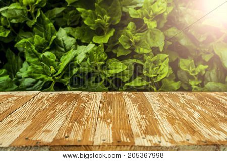 Empty Rustic Wood Table Top On Blurred Spinach In The Garden Background. Can Montage Or Display Your