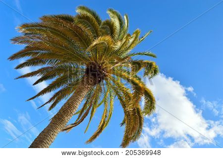 Beautiful palm tree against a blue sky.