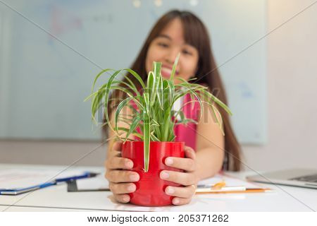 Asian employee looking at green tree in her office