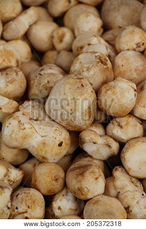 Fresh mushrooms for cooking in the market