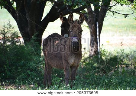 donkeys are stubborn but make really good pets