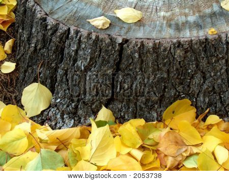 Fall Leaves By Stump