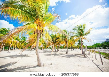 Palm trees on white sand beach. Playa Sirena. Cayo Largo.