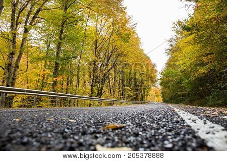 travelling, hitchhiking, environmetal protection concept. long brunches of tall trees hides the light sky under long road that runs through the autumn wood
