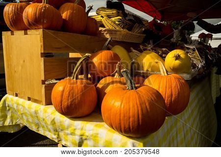 A full assortment of Fall/Winter squash at the local farmer's market