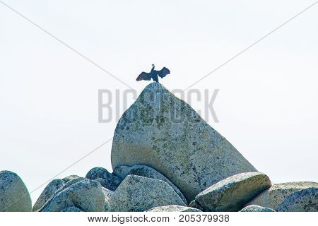 near the beach, on the rocks sitting bird, beautiful sea bird poses at the seaside. Blue Sky