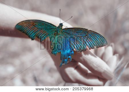big Butterfly sitting of a girl's hand, bright swallowtail on the hand. on the street.