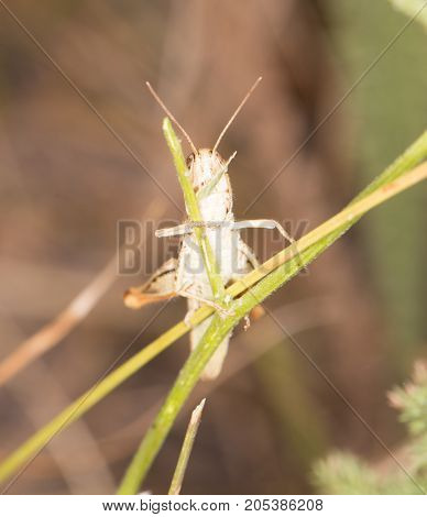 grasshopper in nature . In the park in nature