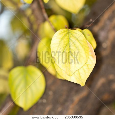 autumn leaves in nature . In the park in nature