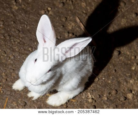 growing rabbits on the farm . In the park in nature