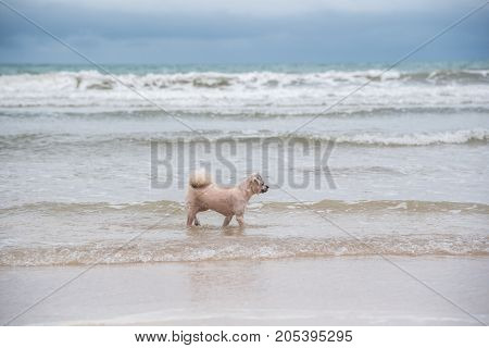 Dog Running Happy Fun On Beach When Travel At Sea
