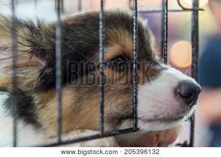 Puppy In Cage Dog With Sadness