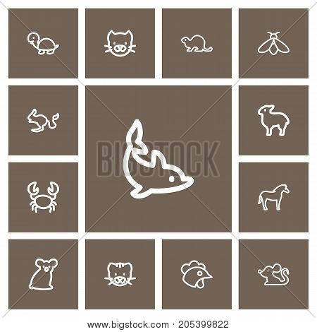 Set Of 13 Editable Zoo Outline Icons. Includes Symbols Such As Bumblebee, Calf, Kitty And More