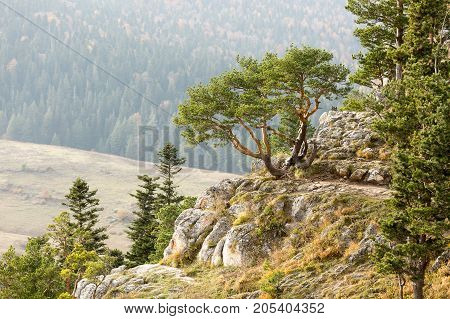 air polution, protection of nature, eco lifestyle concept. on the background of hill with big field there is rock with lots of coniferous trees, one of them has rather fancy form